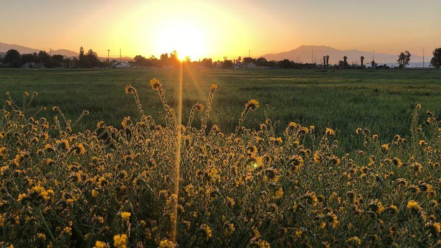 I lil morning sunlight Sunrise Sunrise_sunsets_aroundworld Sunrise_Collection Sky Plant Land Scenics - Nature Field Beauty In Nature Sun Sunlight Nature Orange Color