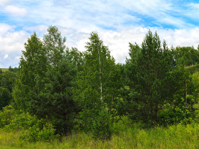 Beauty In Nature Cloud - Sky Day Environment Foliage Forest Green Color Growth Land Landscape Lush Foliage Nature No People Non-urban Scene Outdoors Plant Scenics - Nature Siberia Sky Tranquil Scene Tranquility Tree