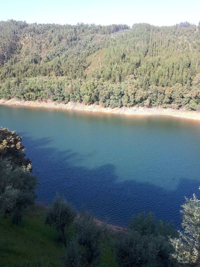 High angle view of lake and trees in forest