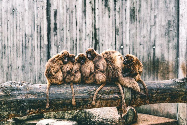 Dead bird on wood against wall