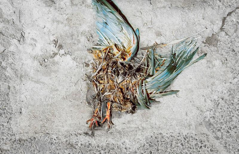 Dead bird on concrete