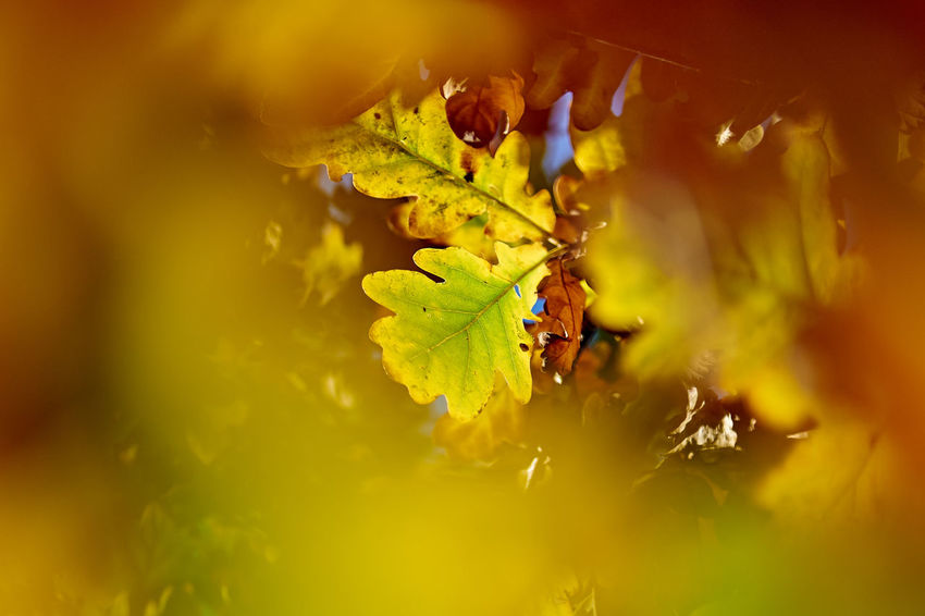 WiddumerWeiher_2017_10_10745 Abstract Nature Autumn Autumn Colors Autumn Leaves Green Green Color Red Abstract Close-up Leaf Light And Shadow Nature No People Outdoors Plant Red Color Selective Focus Sharpness Contrast Yellow Yellow Color Perspectives On Nature