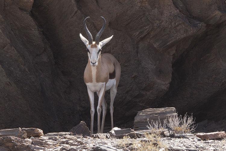 Africa Desert Dry Namibia Nature Shelter