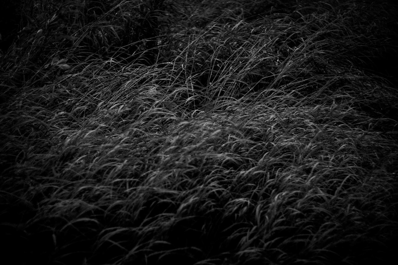 field, dark, no people, nature, night, backgrounds, growth, grass, tranquility, full frame, outdoors, close-up, beauty in nature, black background