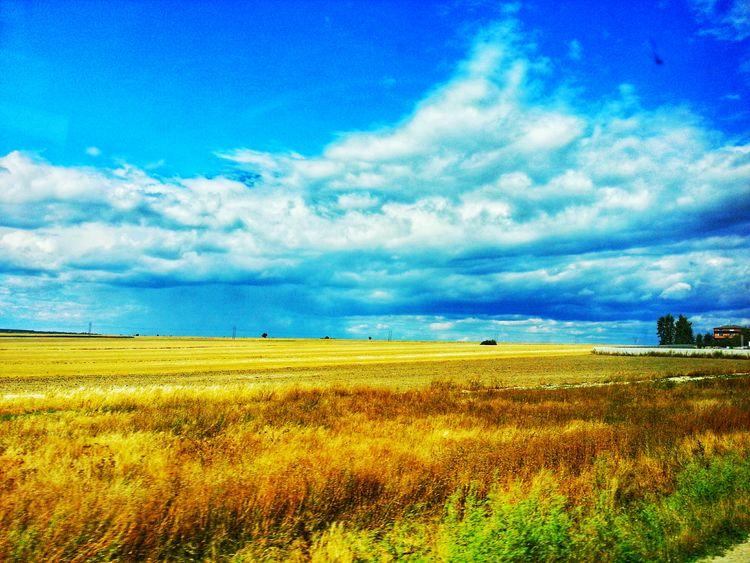 43 Golden Moments Nature Sky Bluesky Clouds Clouds And Sky Goldencolor View Landscape Landscape_photography Nature Photography Naturelovers Poland Lost In The Landscape Poland Nature EyEmNature Eyem Poland Colour Your Horizn