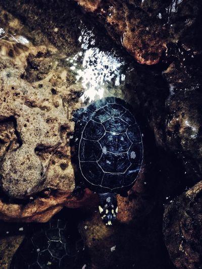 Tortuga negra en el biocentro Tortuga Water Turtle Biocentro Water