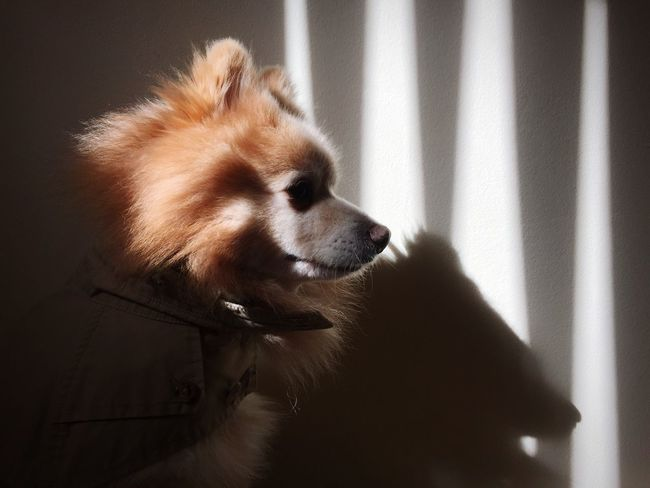 Detective Kimba in his new Ralph Lauren Trenchcoat | Open Edit Light And Shadow