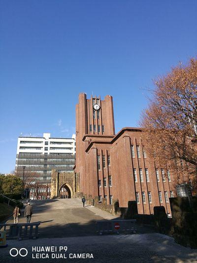 今日も安田講堂は美しい City No People Tree Building Exterior Architecture Outdoors Clock Sky Day First Eyeem Photo