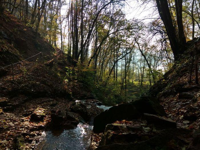 Aussicht auf den Neckar von der Margaretenschlucht Tree Nature Growth Day Beauty In Nature No People Outdoors