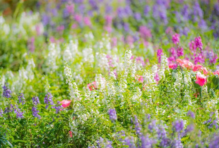 Colorful flowers Colorful Flower Collection Flowers Flower Flowering Plant Plant Beauty In Nature Freshness Fragility Vulnerability  Growth Nature Focus On Foreground Outdoors Close-up Flower Head EyeEmNewHere