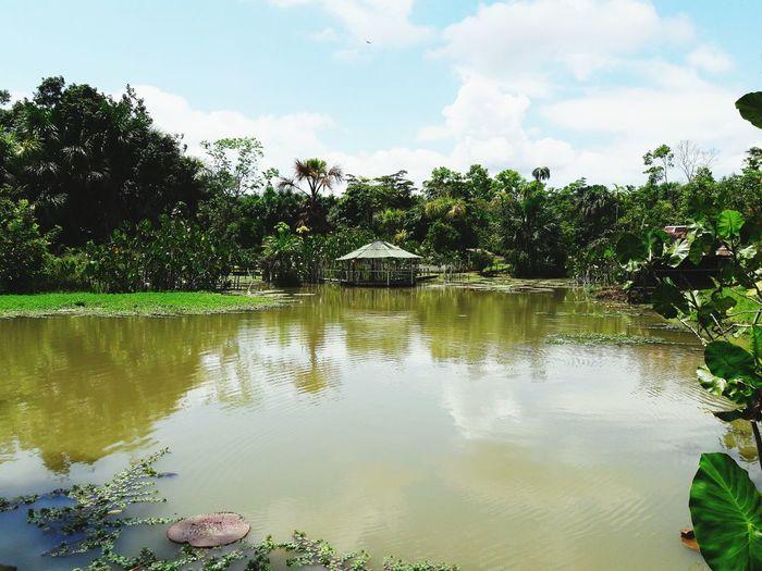 LAGUNILLA PEDRITO Amazonas-Peru