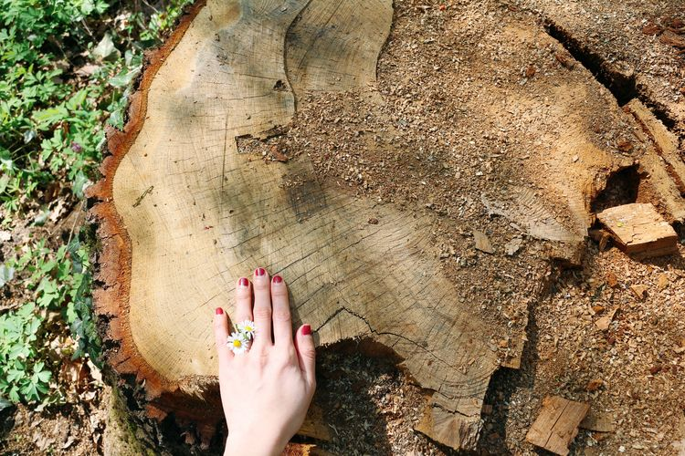 Cropped hand of woman on tree stump in forest