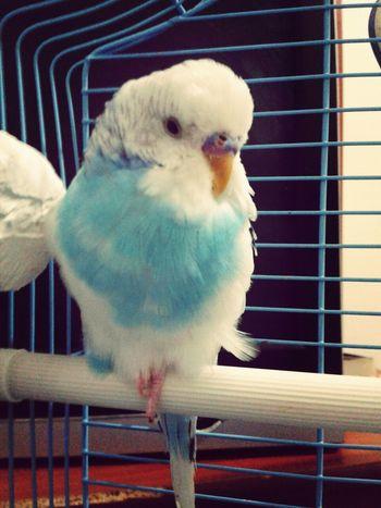 Mybird MyLove❤ EyeEmBestPics Mybestfriend