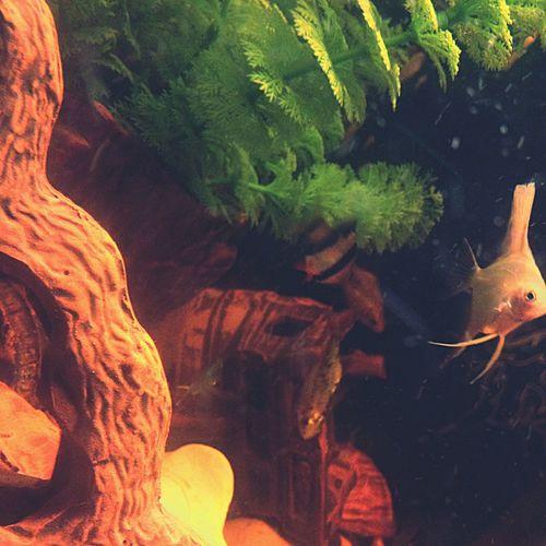 Fish My Love Homesweethome Cool ????????