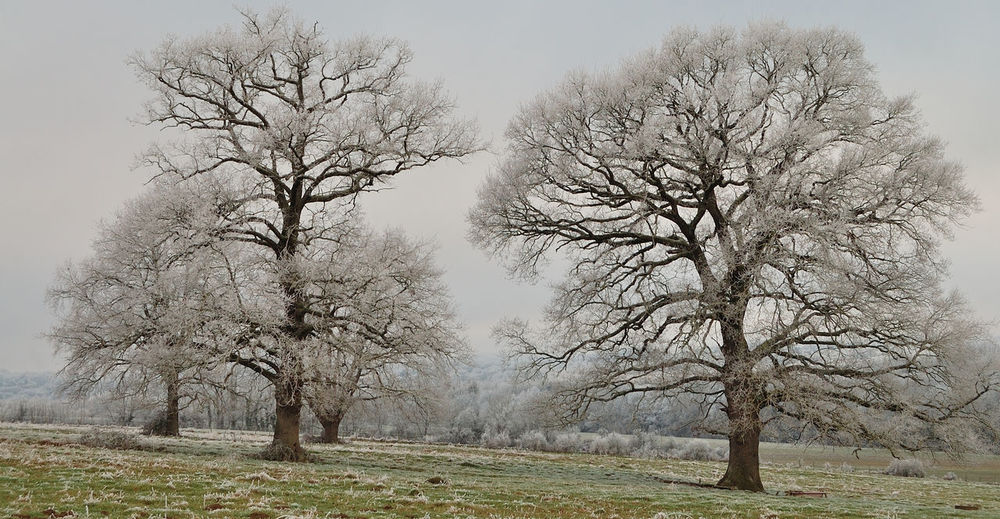 Arbres Bare Tree Branch Campagne Champs Cold Day Fog Givre Hiver Igersbourgogne Igersyonne Landscape Landscape_Collection Landscape_photography Nature No People Outdoors Paysage Sky Tree Trees Winter