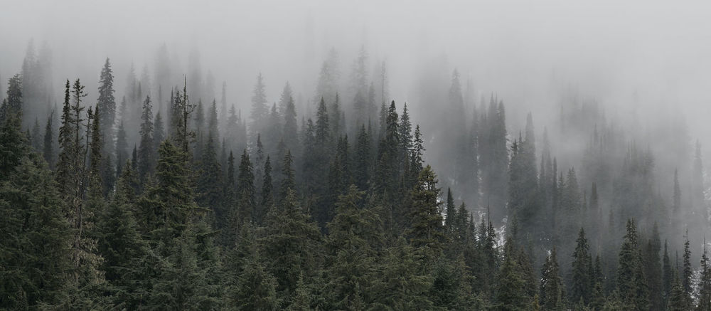 """""""I yearn for mountains I have never even seen"""" -John Muir Alpine Beauty In Nature Canada Day Fog Forest Landscape Mist Mountain Mystical Nature No People Outdoors Tree"""