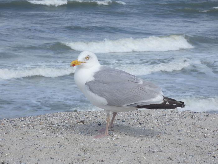 Möwe Bird Wave