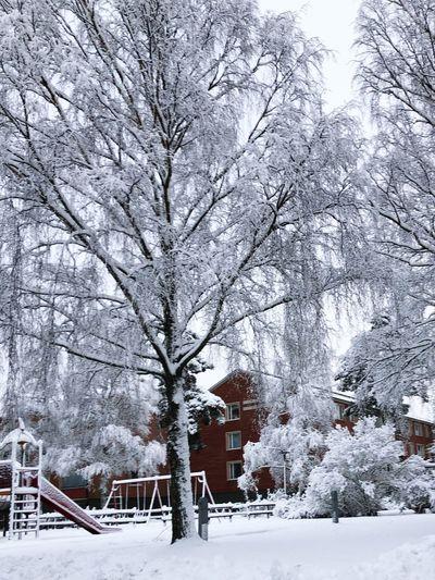 Snow Winter Cold Temperature Beauty In Nature White Color