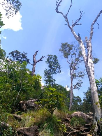 Krabi, Thailand Plant Tree Tranquility Sky Low Angle View Nature No People Beauty In Nature Land Rock - Object Travel Cliff Place Of Worship Land Plant Tree Forest Green Color Tropical Tree Idyllic Growth Scenics - Nature Branch Rock