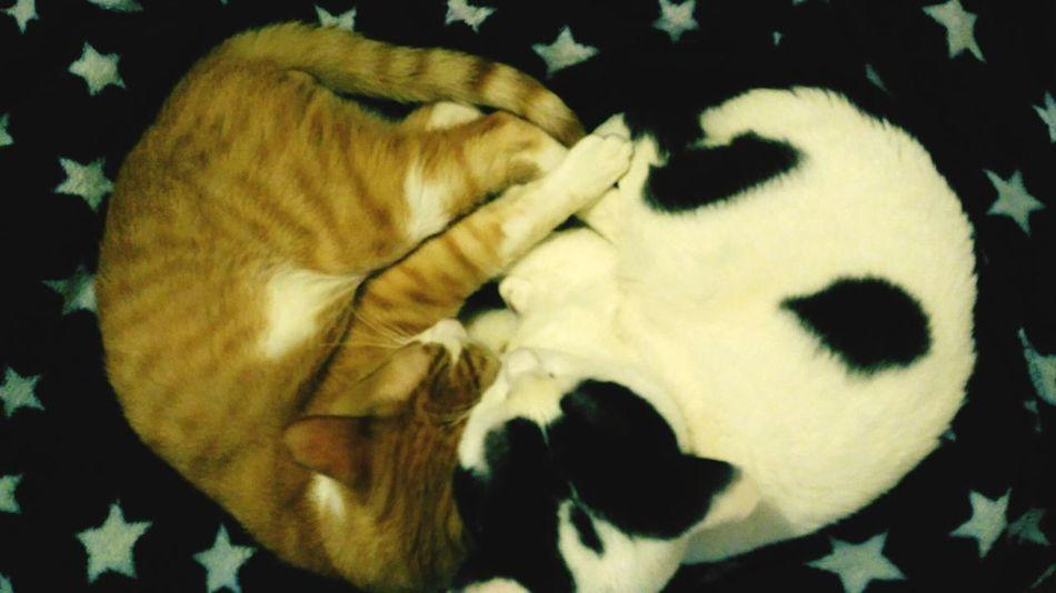 Night Night, Sleep Tight Things I Like My Cats Cats Heart Shaped  ❤ Heart Home Sweet Home My Lovely Cats Cheese! Enjoying Life My Life Is My Family <3 Cats Are My Family