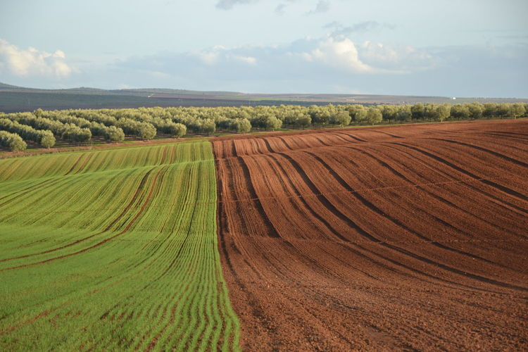 Alentejo 2 Agriculture Landscape Field Nature Crop  Plantation Cultivated Land