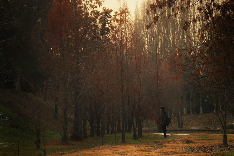 Man standing by trees in forest during autumn
