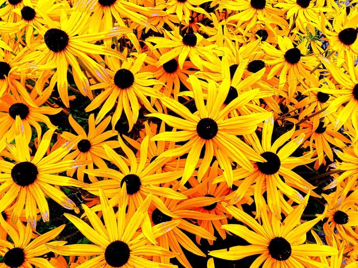 Picture Flower