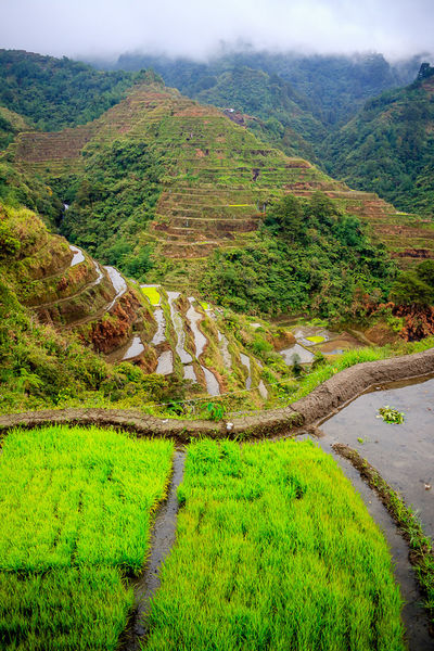 Banaue Banaue Rice Terraces Batad Green Rain Rice Field Ricefields Top Perspective