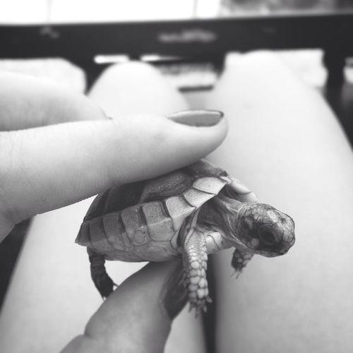Taking Photos Turtle Hi!