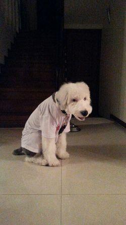 My Dog I Love My Dog 내 티셔츠입은 니키
