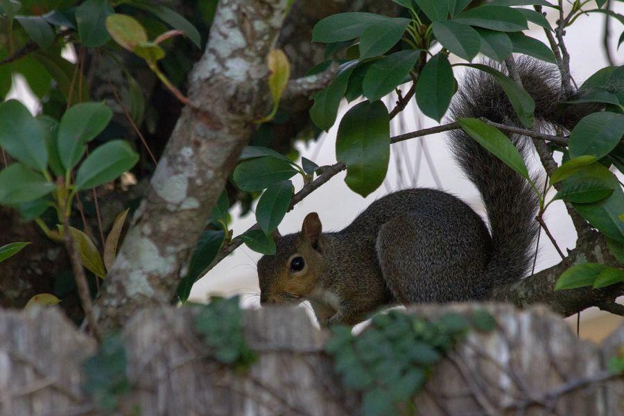 Canon EOS 60D Animal Animal Themes Rodent Mammal One Animal Vertebrate No People