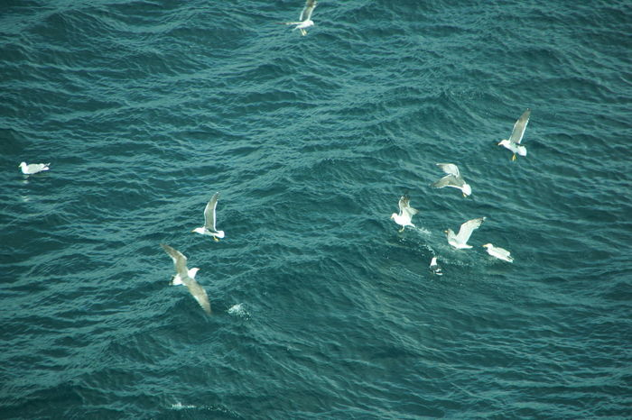 Animal Themes Animals In The Wild Beauty In Nature Bird Floating On Water Flying Rippled Sea Seagull Water Bird Zoology