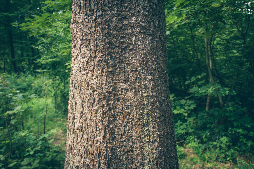 Close-up Day Focus On Foreground Forest Nature No People Outdoors Plant Tree Tree Trunk