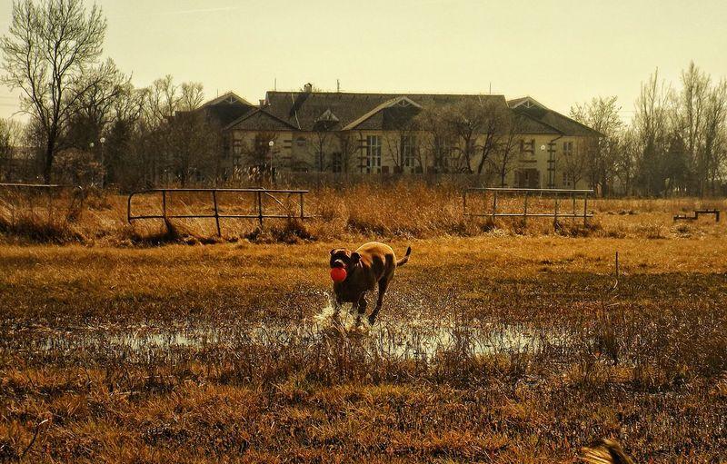 Animal Themes Nature No People Outdoors Dog Pets Eyeem Hungary The Week On Eyem Notes From The Underground Fujifilm