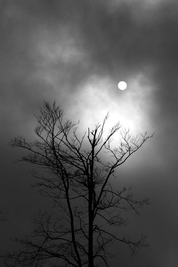 Astronomy Bare Tree Beauty In Nature Branch Cloud - Sky Crescent Full Moon Half Moon Low Angle View Moon Moon Surface Moonlight Nature Night No People Outdoors Scenics Silhouette Sky Tranquil Scene Tranquility Tree