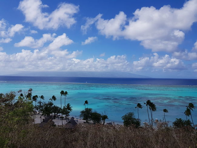 Sand Blue Sea Water Beach Mer Ilsland Tahiti Palm Tree Moorea French Polynesia Beauty In Nature Vacations Travel Destinations Landscape Tranquility Cloud - Sky