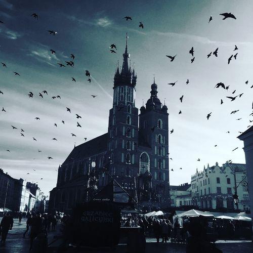 Architecture Built Structure Sky Bird Outdoors City Flock Of Birds Cloud - Sky Krakow Xmas Xmas Market Shadows & Lights Shadows Silhouette Cityscape Krakow,Poland Krakow