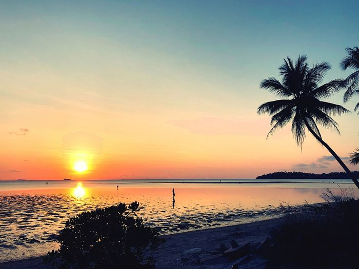 Koh phanang Water Sunset Sky Beauty In Nature Scenics - Nature Tranquility Sea Beach Tranquil Scene Land Silhouette Orange Color Tree Nature Horizon Idyllic Horizon Over Water Plant Sun Reflection