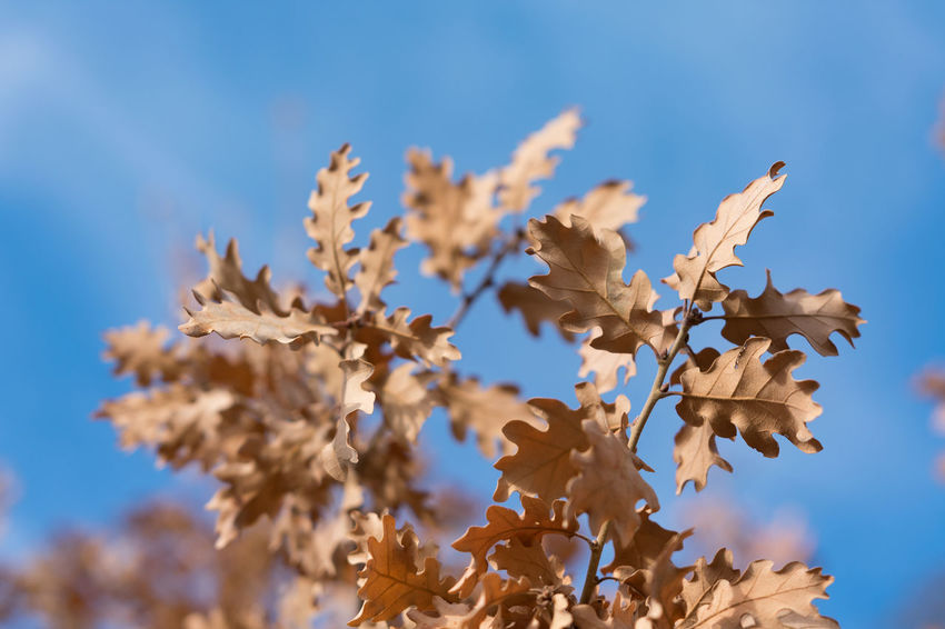 Autumn Autumn Leaves Sigma 18-35 F1.8 Aostavalley Autumn Beauty In Nature Blue Sky Close-up Day Focus On Foreground Fragility Leaf Nature Nikon D3400 No People Outdoors Sunny Day
