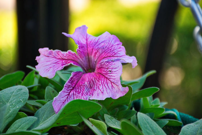 Green Green Color Nature Nature Photography Pink Flower Flower Collection Flower Head Flowers Garden Garden Photography Nature_collection