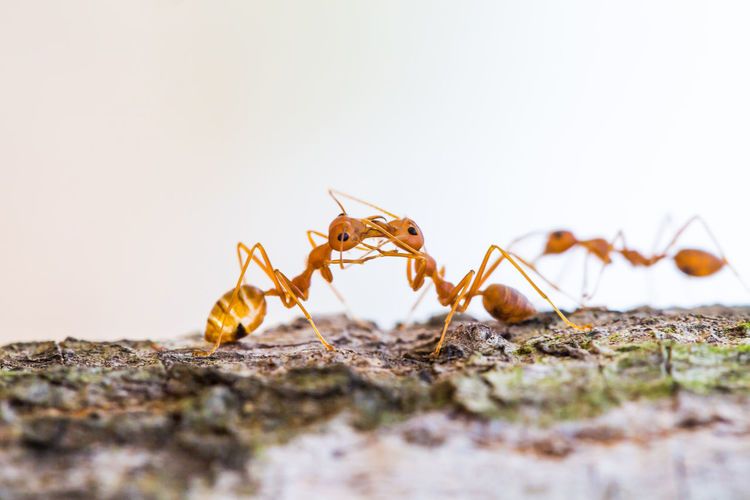 Ant action on the tree Invertebrate Insect Animal Animal Themes Selective Focus Close-up Animal Wildlife Animals In The Wild No People One Animal Nature Day Ant Copy Space Animal Body Part Zoology Arthropod Outdoors Spider Animal Leg Surface Level Valentine Day - Holiday