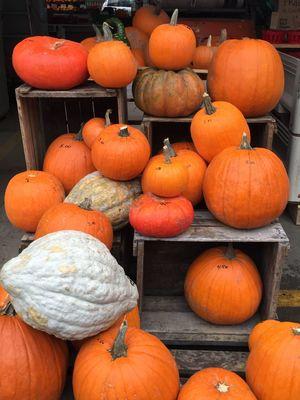 Pumpkin Orange Color Healthy Eating Freshness Food Montreal, Canada Trip To Canada  Autumn🍁🍁🍁 Jeantalonmarket Foodmarket October Sweet October!