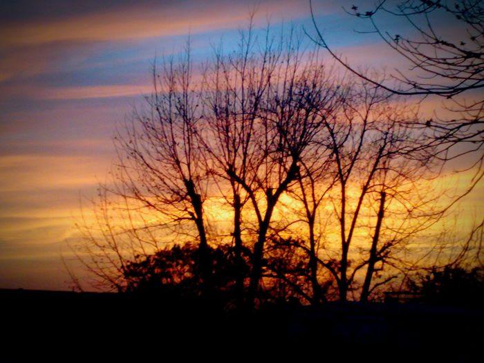 A pekan tree at sunset Pekan Tree Sunset Winter Autumn Leafs