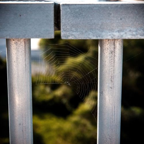 Spider Web Close-up Focus On Foreground Day Outdoors No People Nature Water Fragility Trapped Freshness EyeEmNewHere