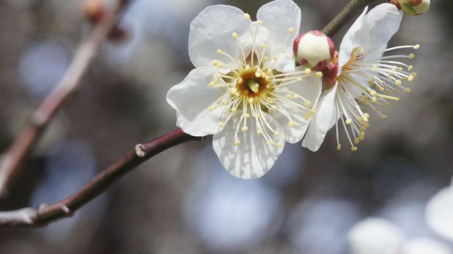 Close-up Flower Flower Head Beauty In Nature Day Kyoto, Japan Nex5 Industar-50 3,5/50 INDUSTAR
