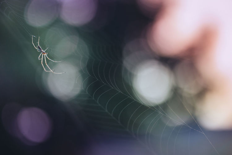 Spider in the sun waiting for some food in the spider web. Animal Themes Beauty In Nature Bokeh Cellar Spider Close-up Copy Space Day Focus On Foreground Fragility Makro Nature No People Nusshain 06 17 Outdoors Pholcidae Selective Focus Spider Spider Web Vibrating Spider Web