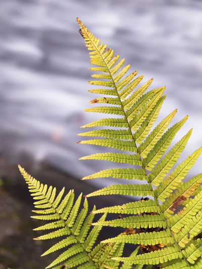 Close-up of fern leaves on tree against sky