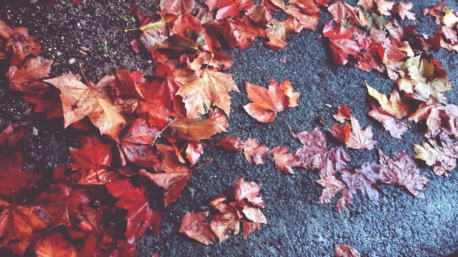 The Autumn Leaves Autumn Collection Backgrounds Nature Outdoors Enjoy The New Normal Fresh On The Market 2016 Fresh On The EyeEm My Smartphone Life Huawei P8 Lite Ground Floor Red Leaf Of Autumn Brown Color