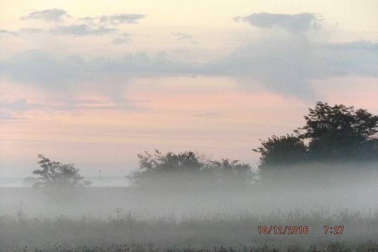 Morning Sun The Farm