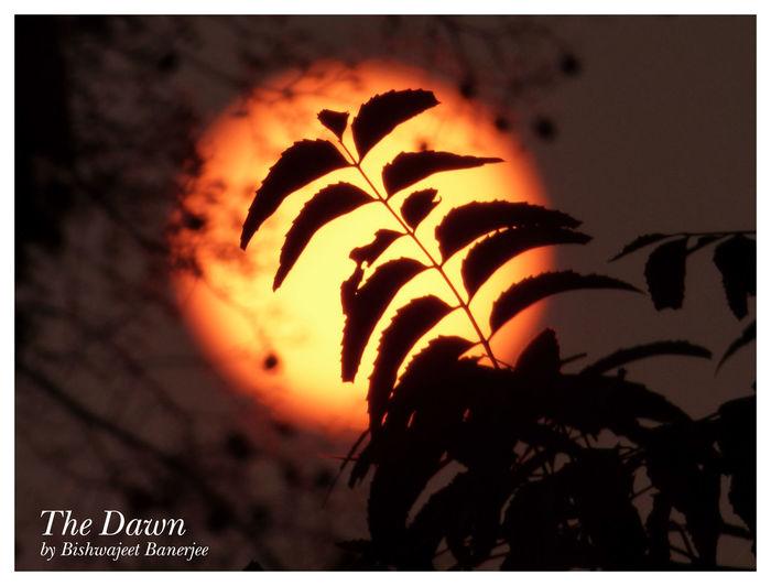 The Dawn D Dawn Dusk Dusky Dusky Sun India Indian Leaves Neem Silhouette
